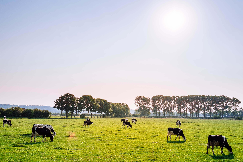 BEWUST Brabant van start dankzij POP3 subsidie
